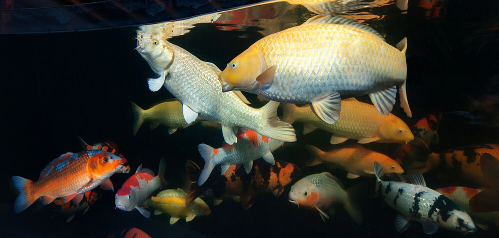 peixes de água doce e salgada