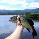 pescar black bass