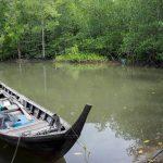 pesca no mangue