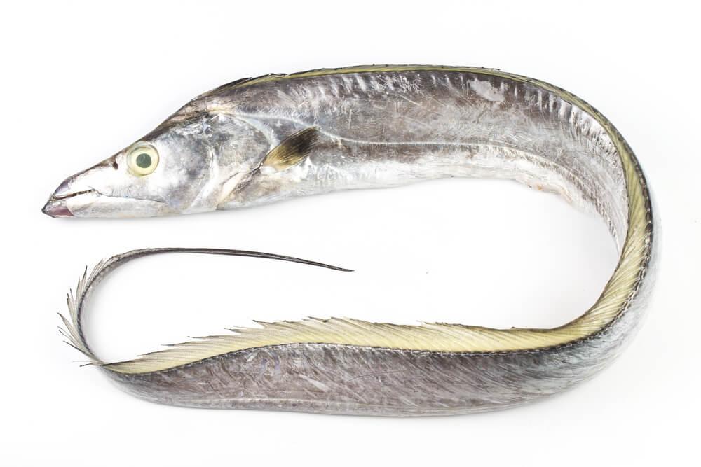 peixe-espada