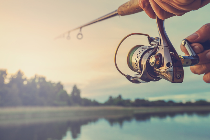 como pescar anchova
