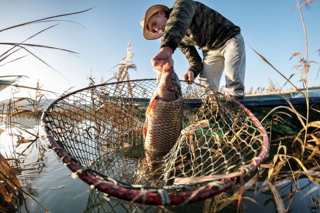como pescar carpa cabeçuda