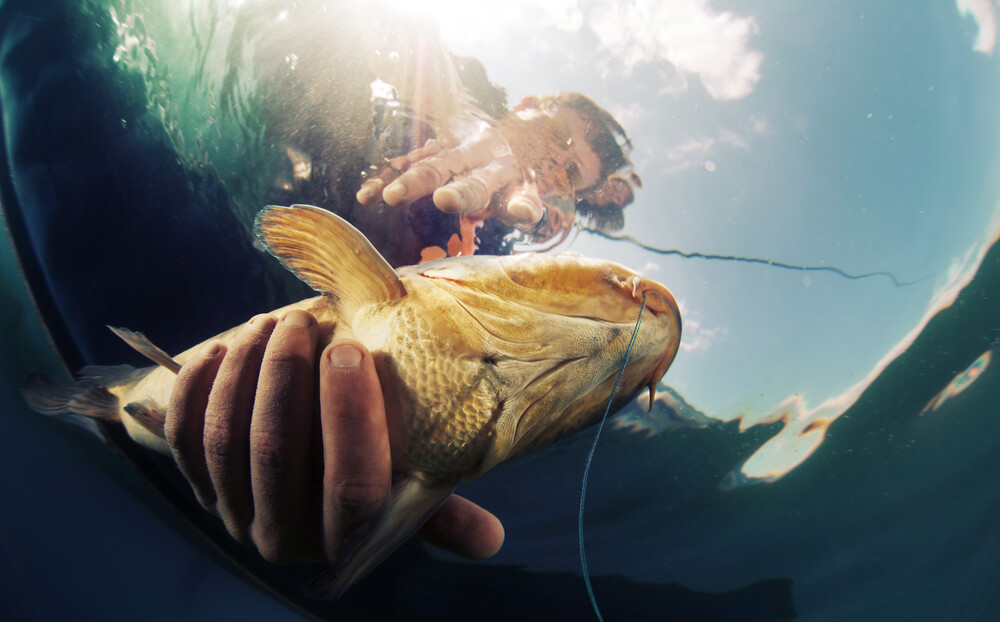 pesca esportiva machuca o peixe