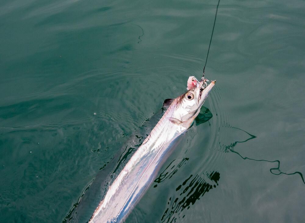 peixes de água salgada peixe-espada