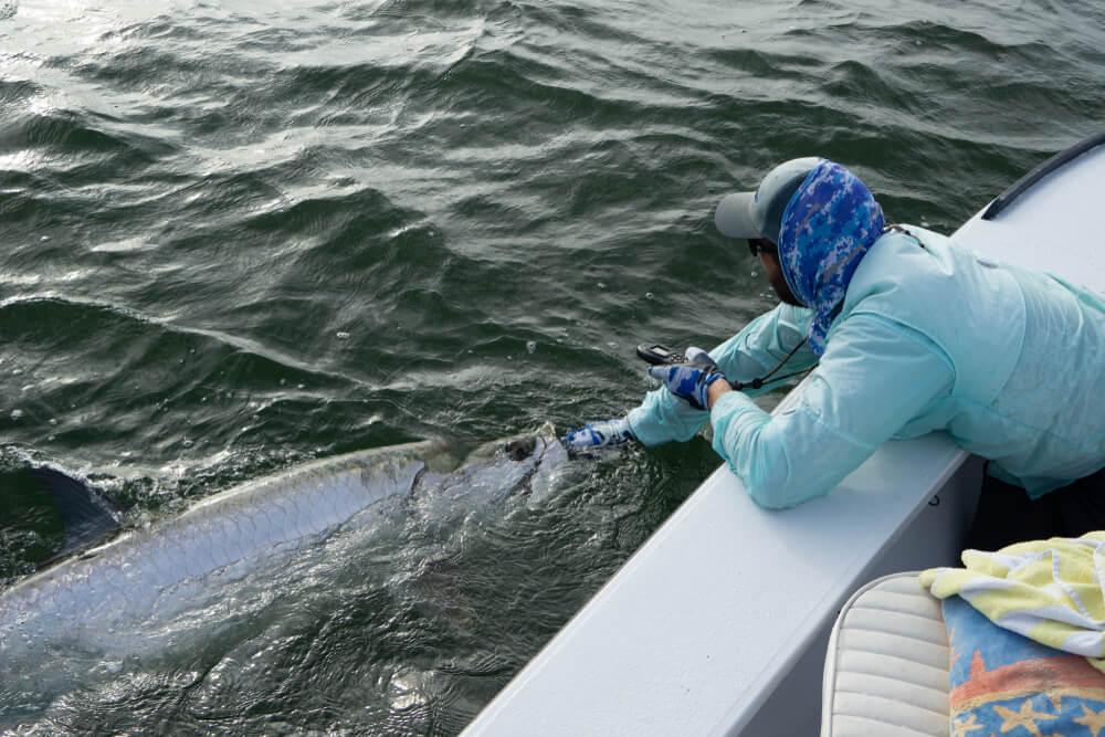 peixes de água salgada tarpon