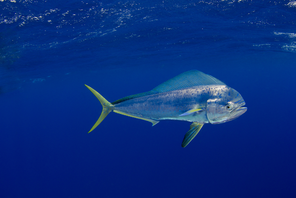 espécies de peixe