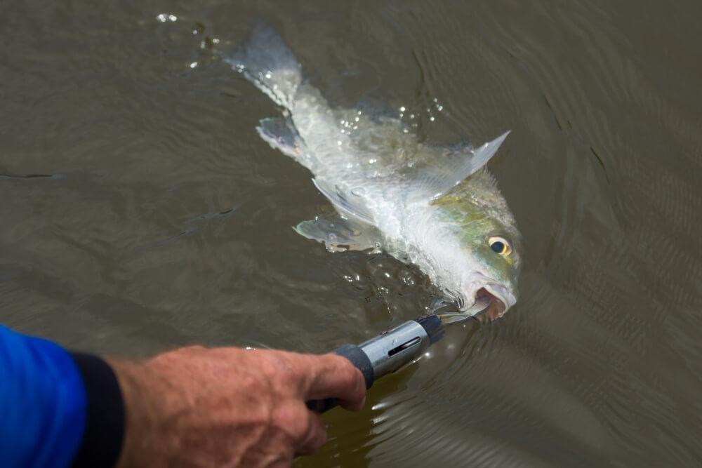 alicate para pesca alicate de contenção