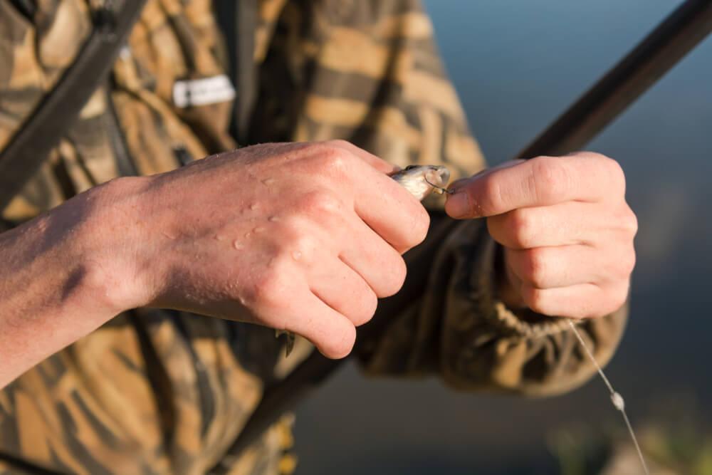 como-pescar-pirarara-iscas-naturais