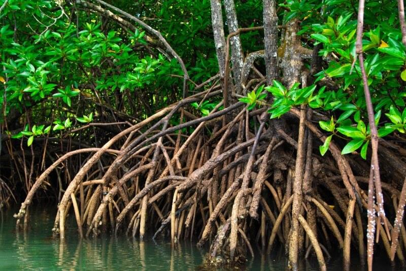 pesca no mangue o que é um mangue